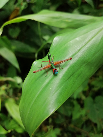 insecto en otun quimbaya.jpg