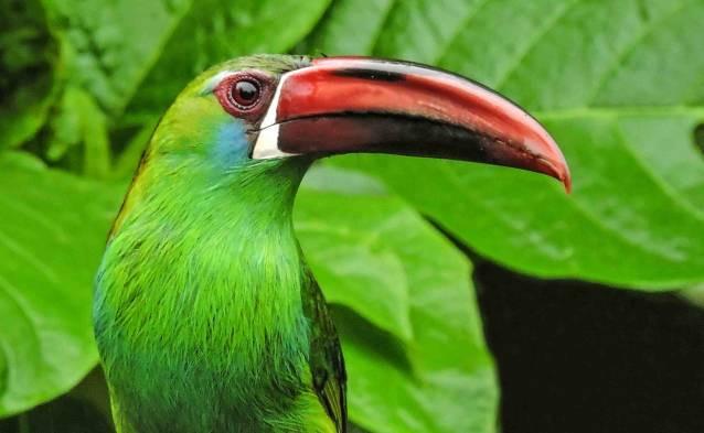 bb bird.jpg