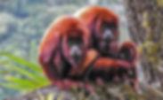 entre-monos-y-bejucos-birding-and-herpin
