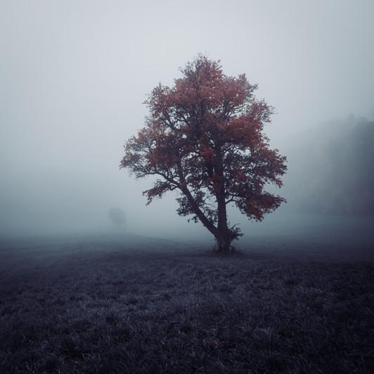 nature 24.jpg