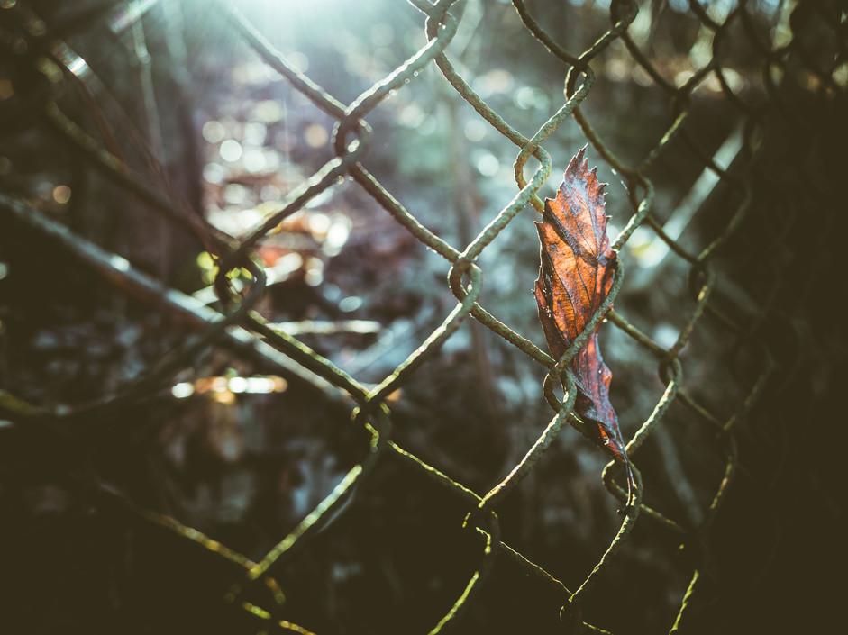 nature3_ws.jpg