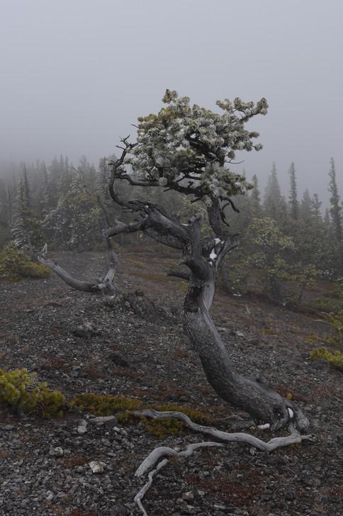 Tree (1 of 1)-2.jpg