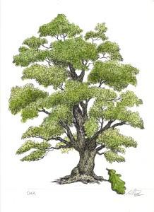 Oak-colored-218x300.jpg