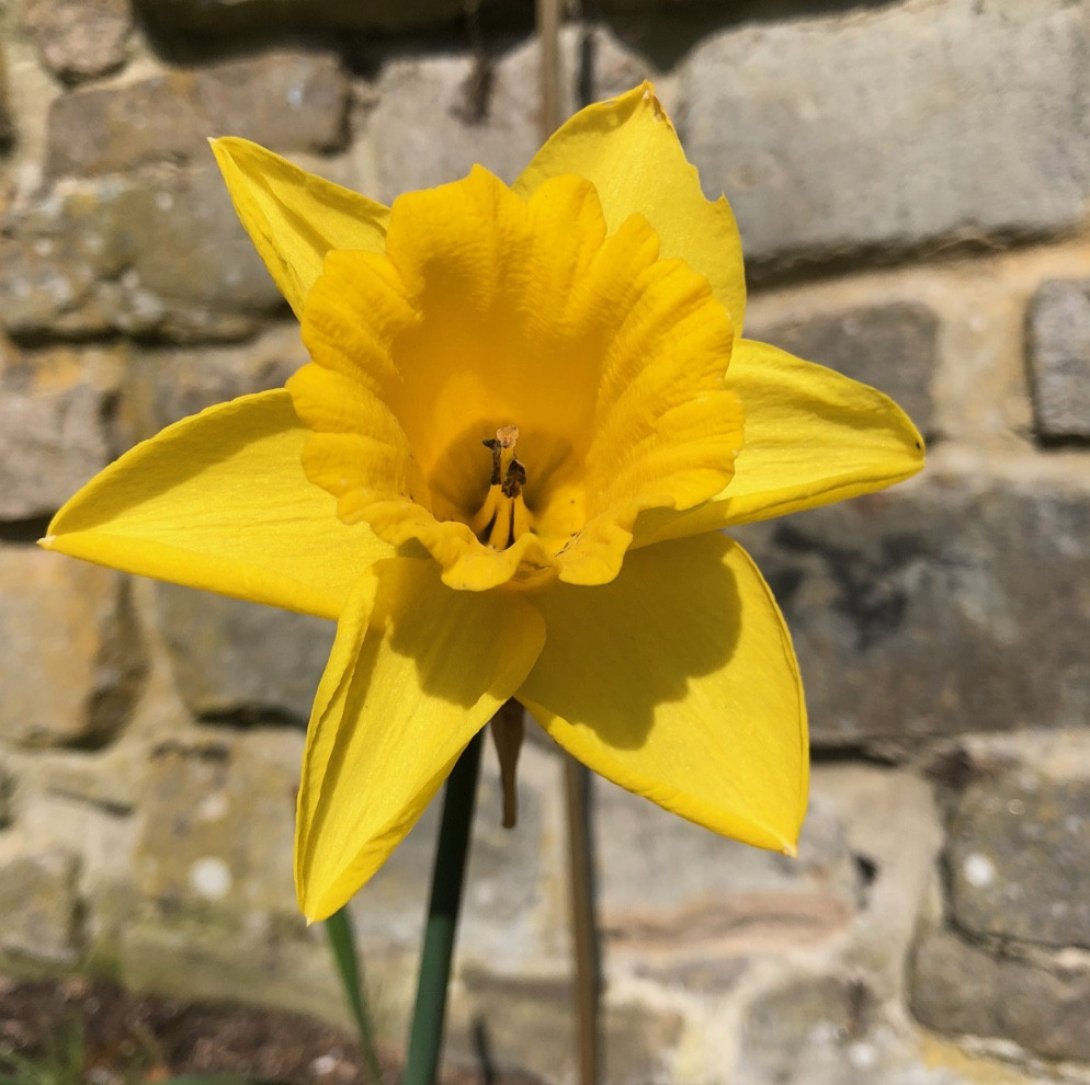 Francesca Sharp Flowers top tips for the sunshine
