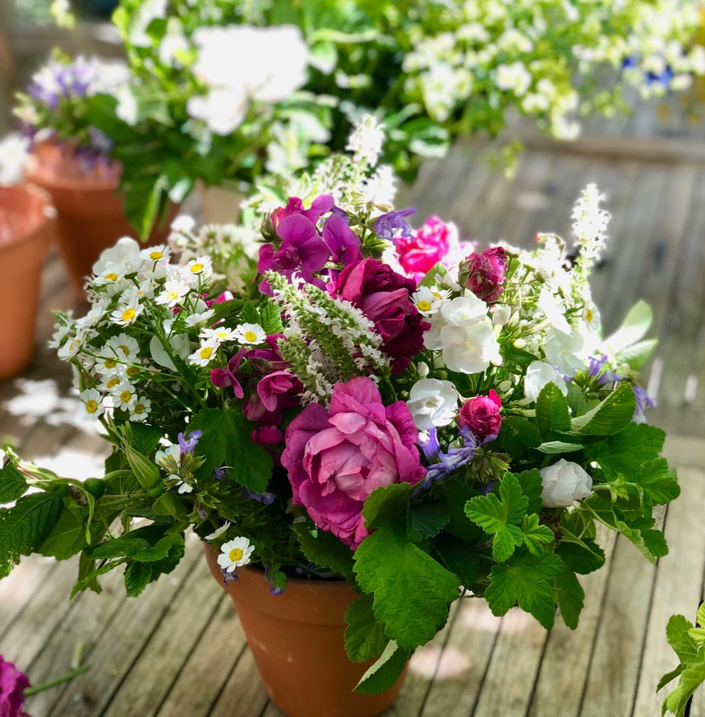 Flower arrangements from Francesca Sharp Flowers in Farnham