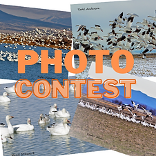 Photo contest picture.png