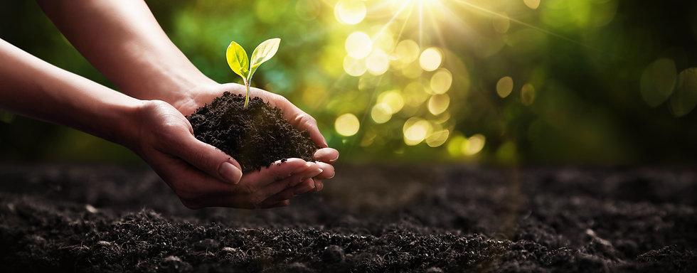 Plant Hand Image Istock.jpg