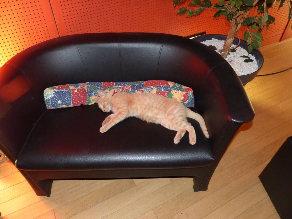 Le chat de garde