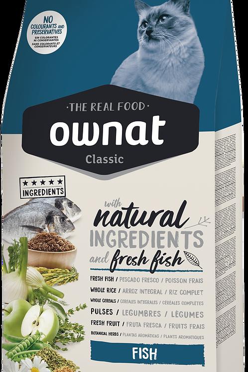 אוונט לחתול בוגר דגים