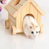 Natural-Wooden-Hamster-House-Hamster-Toy