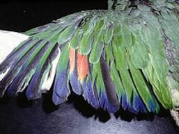 wing2.jpg