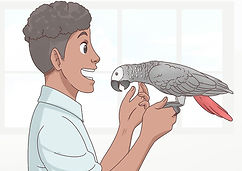 Choose-an-African-Grey-Parrot-Step-9-Ver
