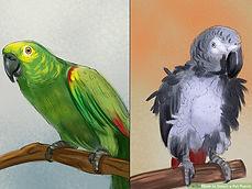 aid32457-v4-900px-Select-a-Pet-Parrot-St