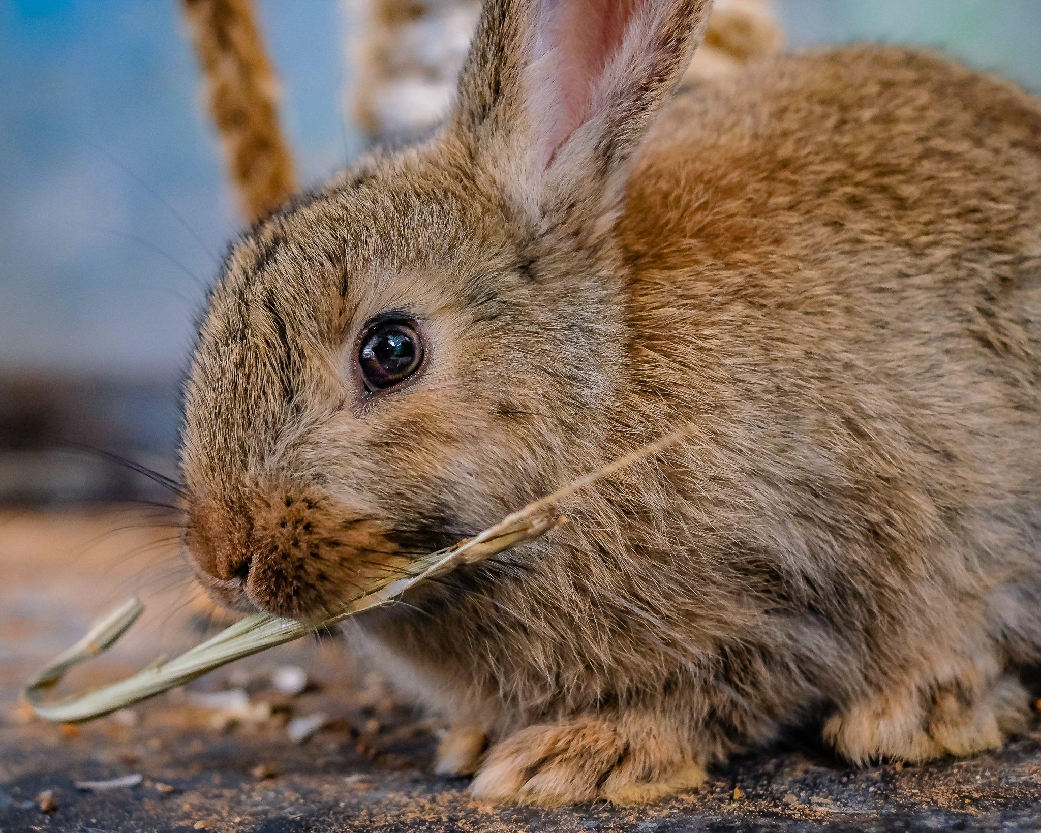 ארנבון