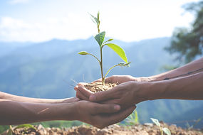 Planter Arbre.jpg