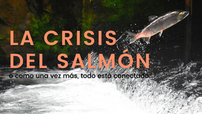 La crisis del salmón