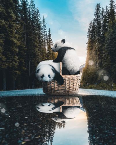 Panda Love by Tom Kai