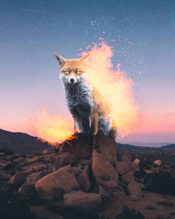 Firefox by Tom Kai
