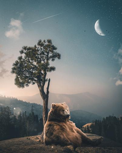 Chill Bear by Tom Kai