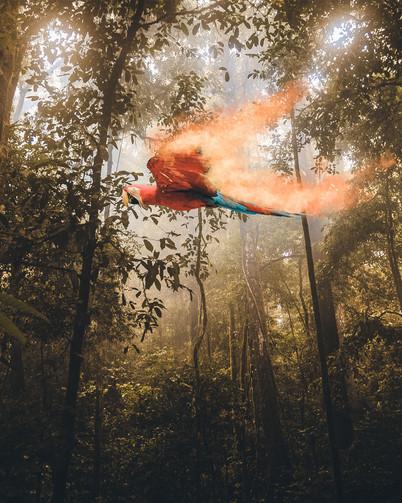 Burning Macaw by Tom Kai
