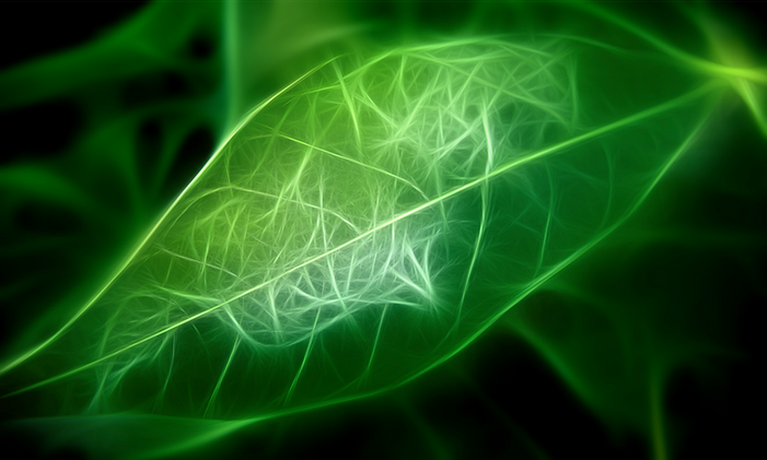 GreenBuilding Florida Leaf.jpg