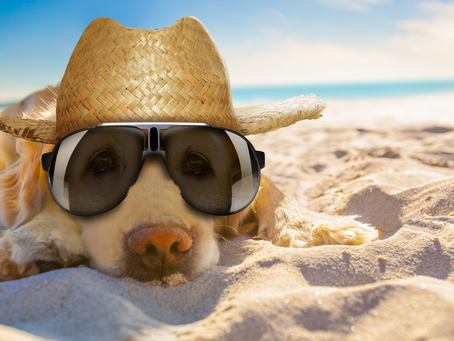 Ways to Stay Safe and Beat the Heat of Summer