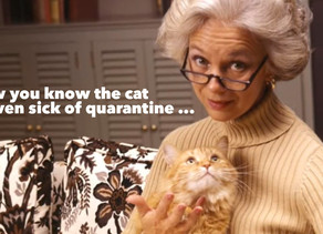 How you know that your cat is even sick of quarantine ...