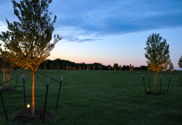 Tree Care & Pruning by Red Valley Landscape & Construction in North Austin