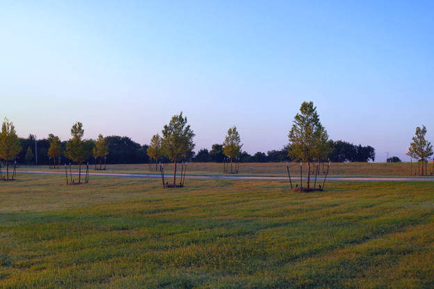 Tree Care & Pruning by Red Valley Landscape & Construction in Elk City, Ok