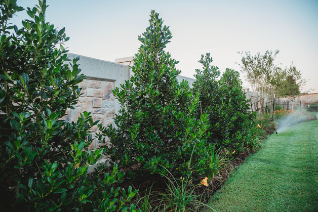 Irrigation & Drainage by Red Valley Landscape & Construction in Austin Texas