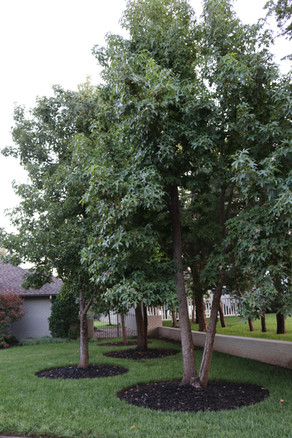 Tree Care & Pruning by Red Valley Landscape & Construction in Nichols Hills, Ok