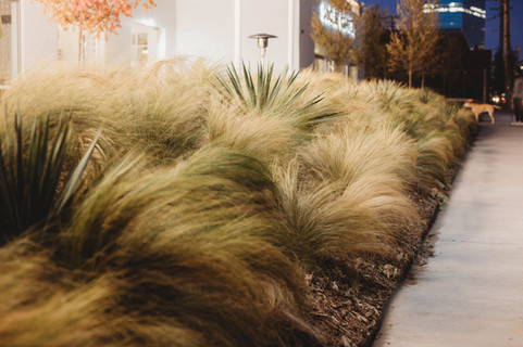 Commercial Landscape Design & Installation by Red Valley Landscape & Construction in Austin