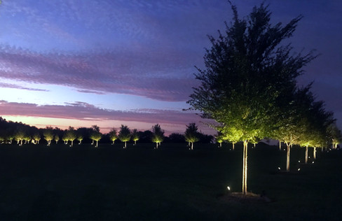 Commercial Landscape Lighting by Red Valley Landscape & Construction in Edmond