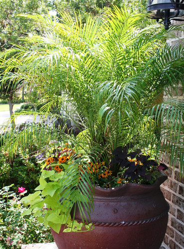 Commercial Seasonal Services by Red Valley Landscape & Construction in Oklahoma City