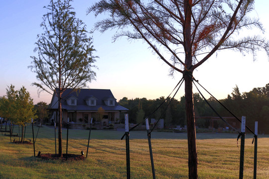 Tree Care & Pruning by Red Valley Landscape & Construction in Barton Creek, Texas