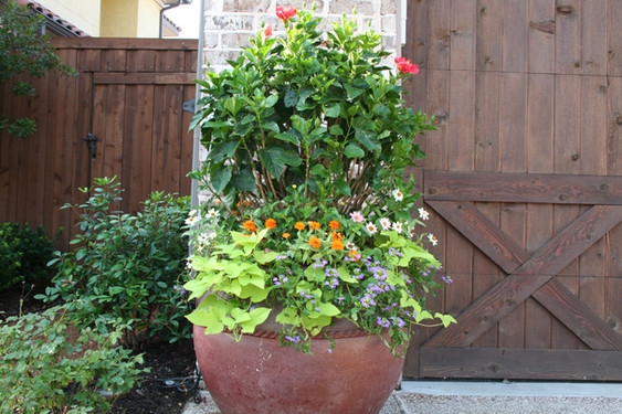 Seasonal Services by Red Valley Landscape & Construction in West Lake Hills, Texas