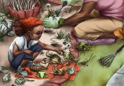 Garden Toads
