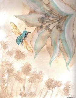 Coffee Jewel Bee
