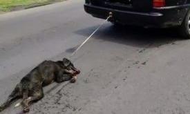 Η  κτηνωδία και η απανθρωπιά δεν δαμάζονται  δυστυχώς