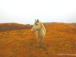 Nature Through Sanket Agarwal's Lens