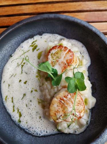 lachs-mit-zitronensauce-restaurant-color