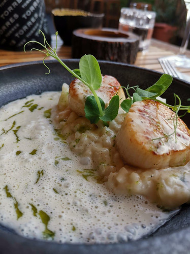 tunfisch-mit-sahnesauce-restaurant-color