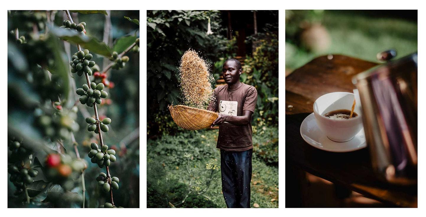 specialty coffee arabica artisan uganda sipi falls sipi river lodge agritourism ecotourism agrotourism