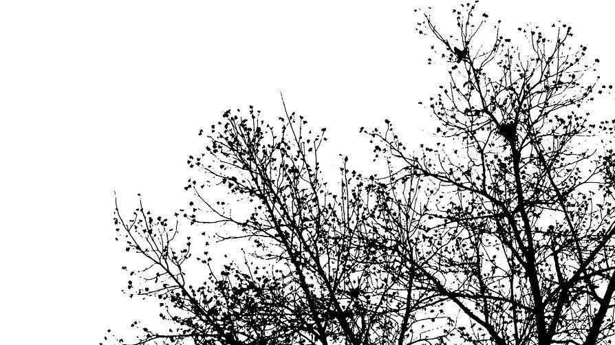 עצים.jpg