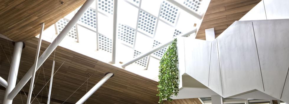 Eucalyptus Ceiling