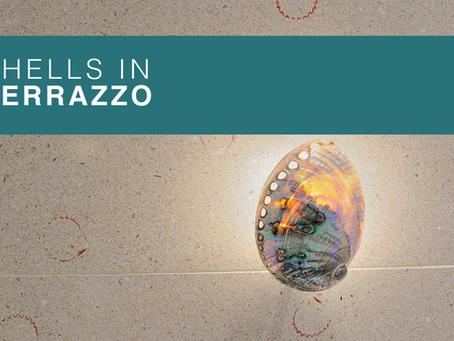 Shells in Terrazzo