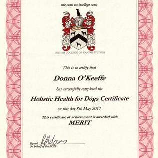 Holistic Health for Dogs.jpg