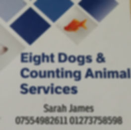 eight dogs & counting animal services