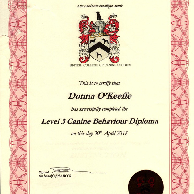 Level 3 Canine Behaviour Diploma.jpg