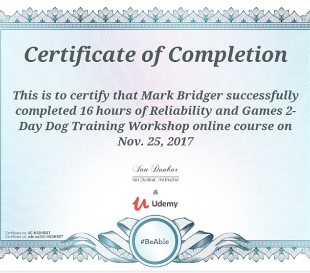 Reliability and games to day dog training